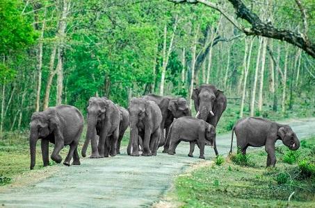 Bandipur National Park, Karnataka