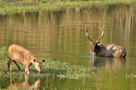 Kanha National Park, Madhya Pradesh