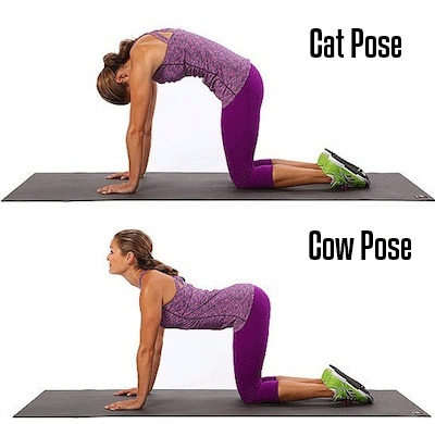 Cat and cow pose