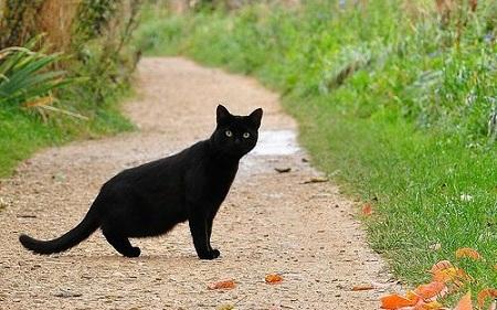 black cat crosses your way