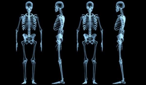Bones facts