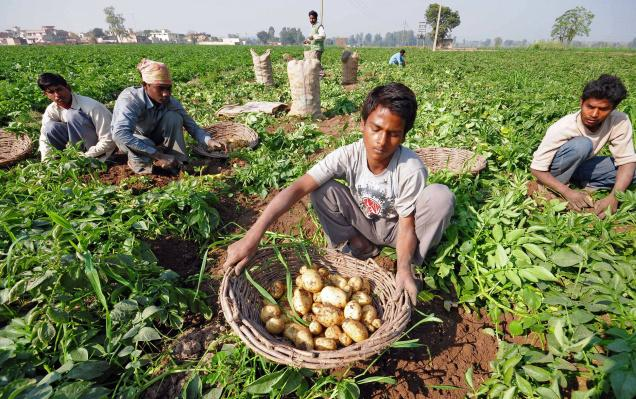 Potato Producing States in India