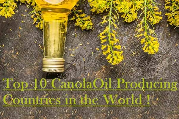 Canola Producing Countries in the World